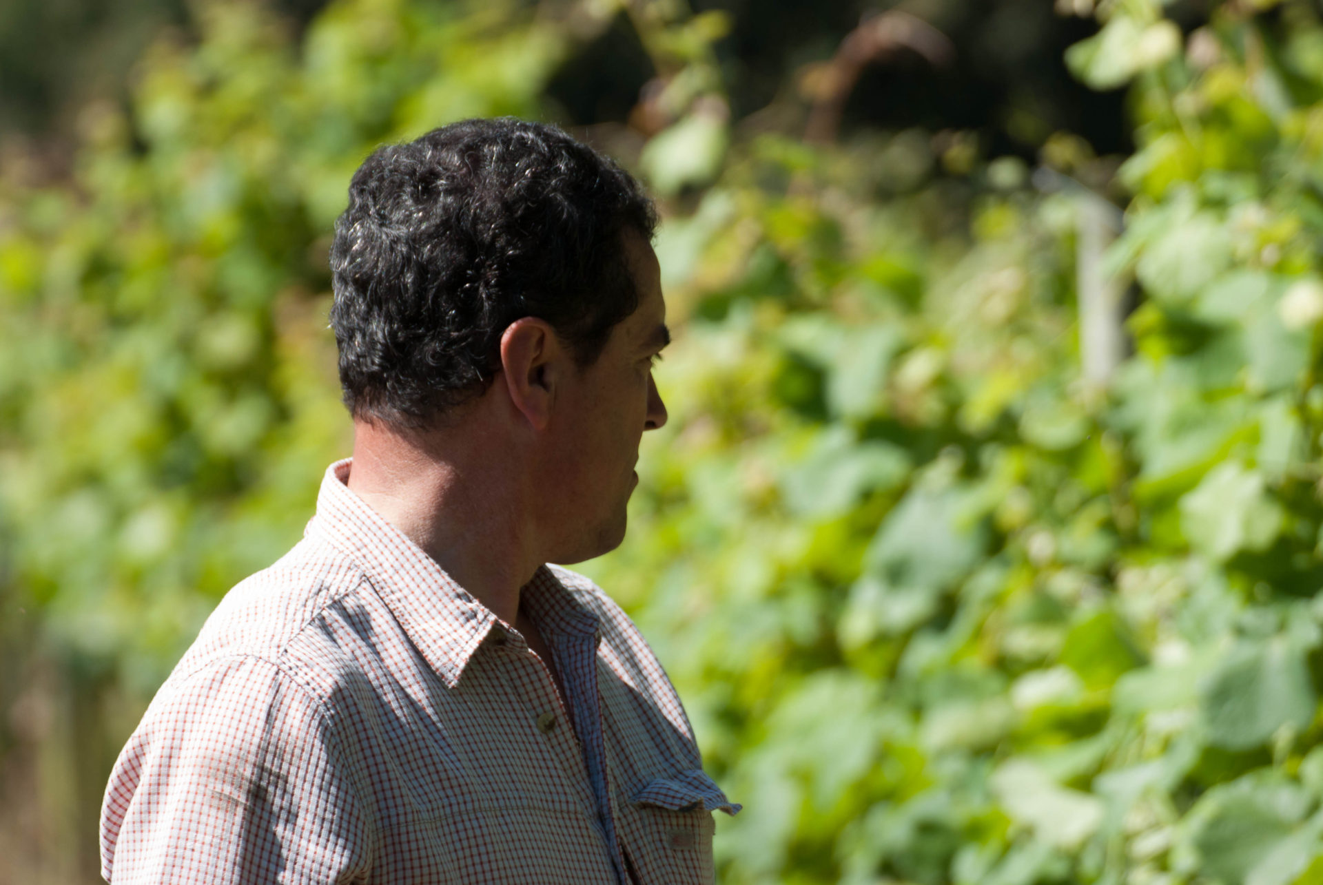 Txakoli Zabalondo Bodega Magalarte Zamudio Jabi en el viñedo
