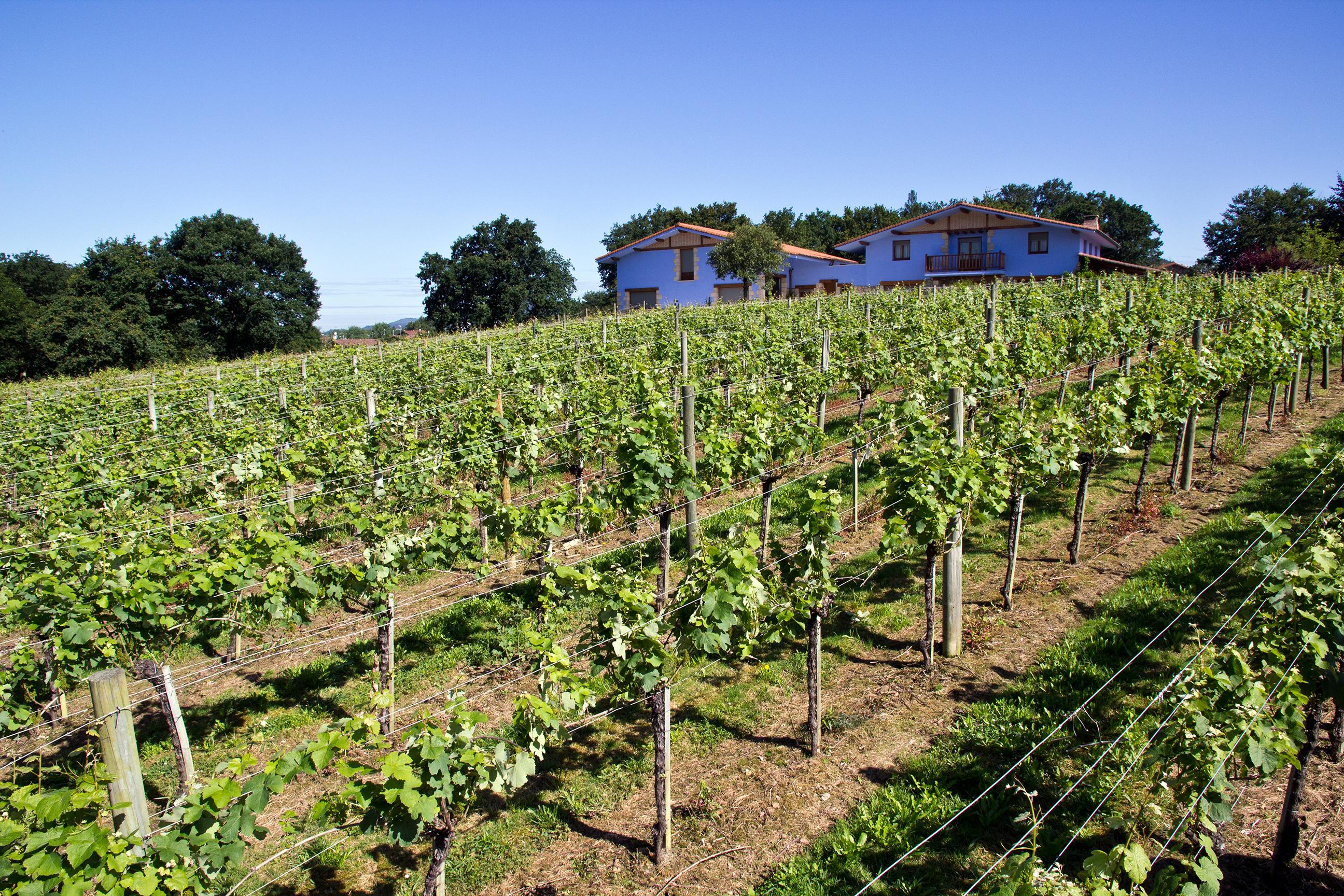 Las variedades de uva en Magalarte Zamudio